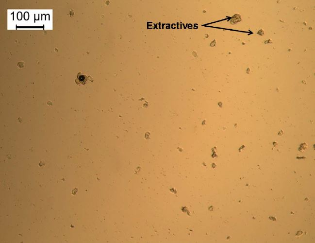 Microscopic image of BTG pine FPBO (R2H.BTG.2016.001b). Some crystalline extractive and black char particles attached to the extractives are seen in the Figure.
